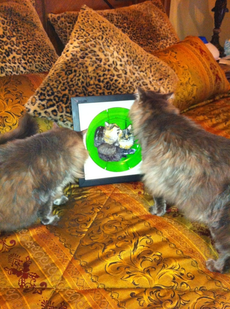 Dr. Warren's Maine Coon cats stalk their portraits